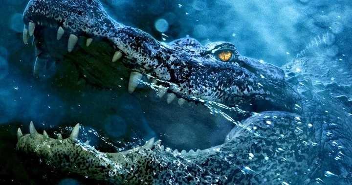 , فیلم Crawl یک اجتماع تمیز از تمساح ها در یک اثر ترسناک طوفانی که همیشه می خواستیم!, اخبار هنری, اخبار هنری